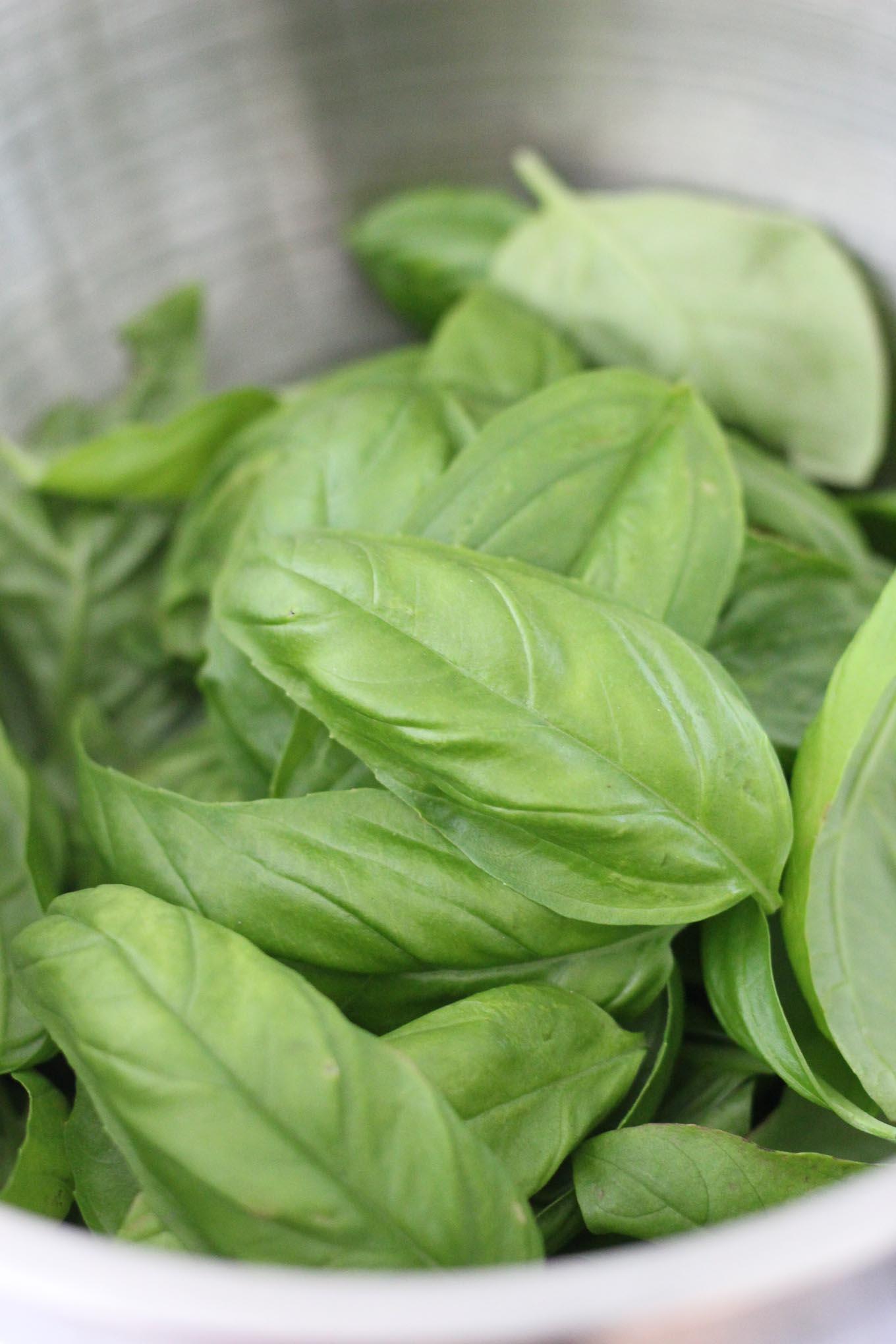 Basil Mint Pesto // Fork in the Kitchen
