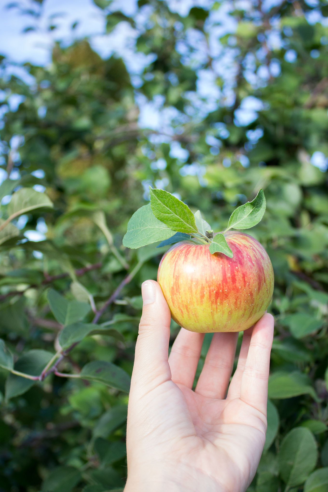 Apple Orchard // Fork in the Kitchen