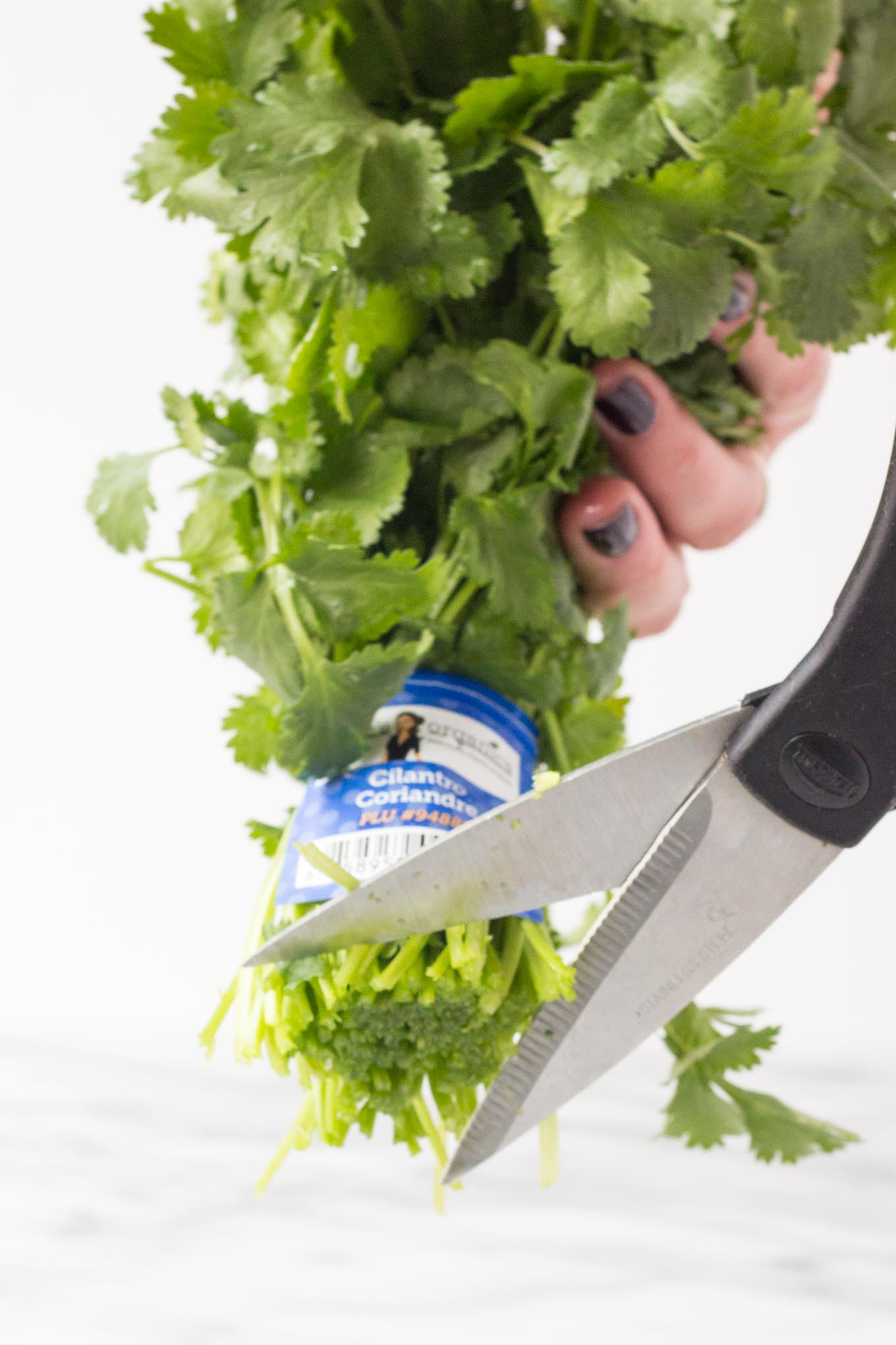 How to Store Fresh Herbs | Fork in the Kitchen