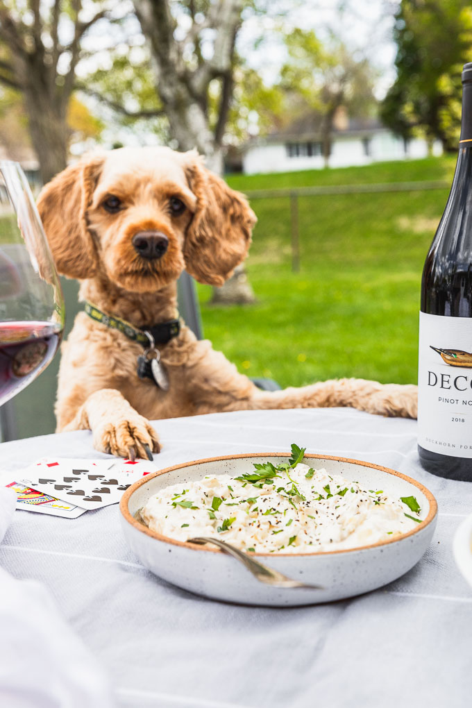 dog looking at camera between a wine glass and wine bottle behind a bowl of grilled sour cream and onion dip with cards next to it
