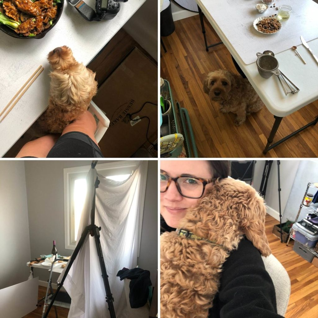 image collage of photography set up and dog trying to get food