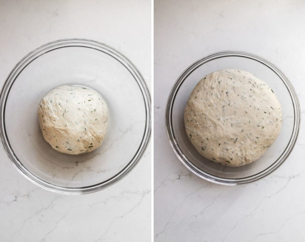 before and after rosemary bagel dough rising